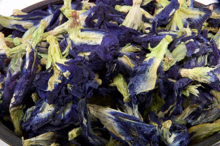 Синий чай из таиланда: особенности, состав и полезные свойства