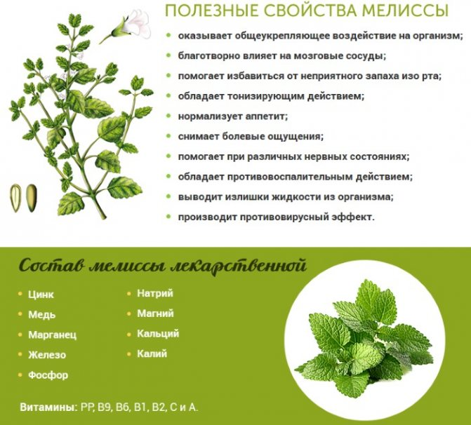 Польза и вред для женщин чая с мятой перечной: что содержит, каковы целебные для организма свойства и противопоказания, а также как заваривать травяной напиток?