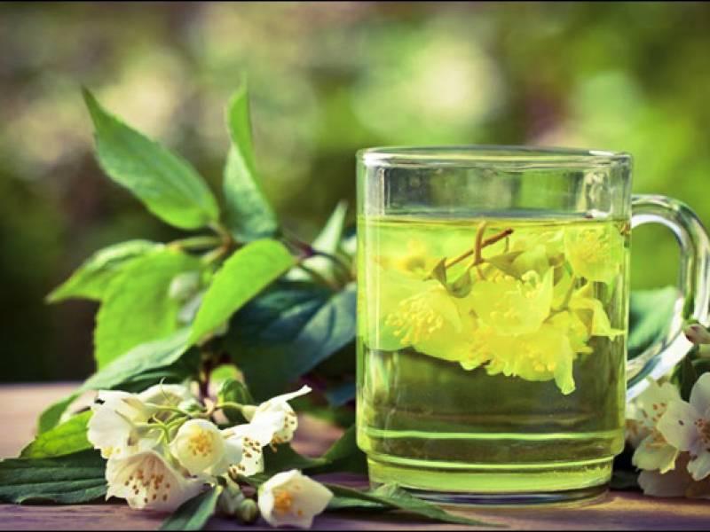 Полезные свойства и противопоказания чубушника. не путать с жасмином!