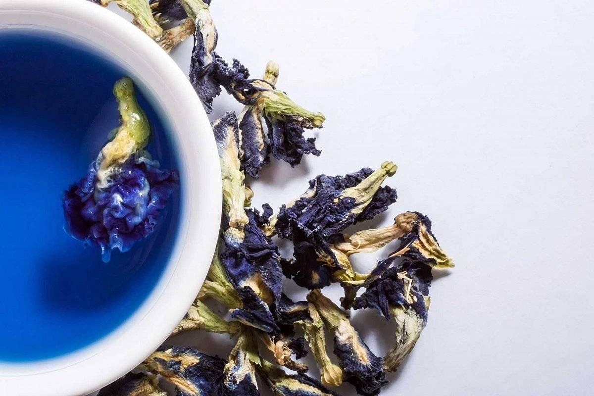 Полезные свойства и противопоказания синего чая из таиланда