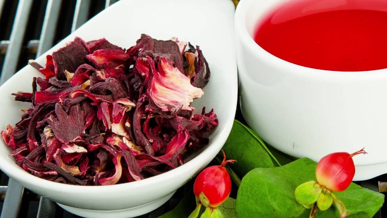 Всё о каркаде: полезные свойства и противопоказания к употреблению чая из суданской розы