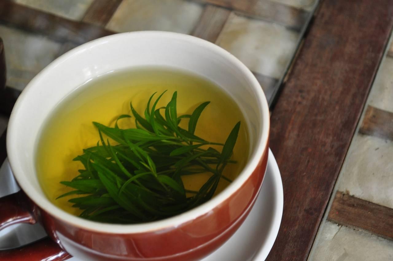 Тмин обыкновенный - фото, полезные, лечебные свойства, применение тмина в народной медицине