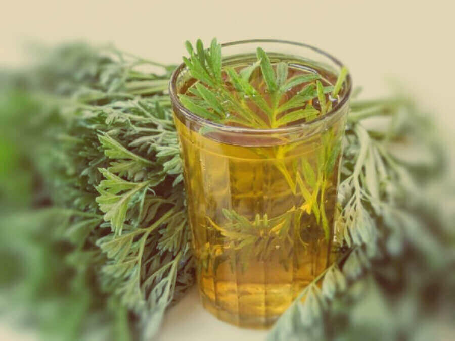 Готовим чай с полынью горькой и наслаждаемся пряным ароматом
