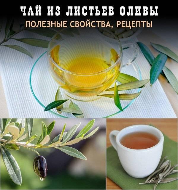 Чай из оливковых листьев излечивает от многих заболеваний! [ рецепт ] - здоровье | доброхаб