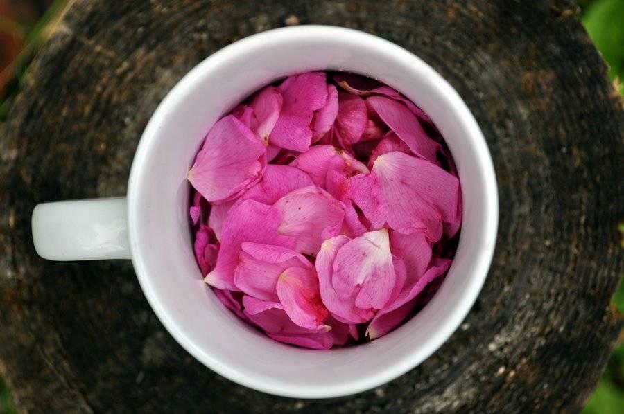 Чай из лепестков розы — польза и вред | польза и вред