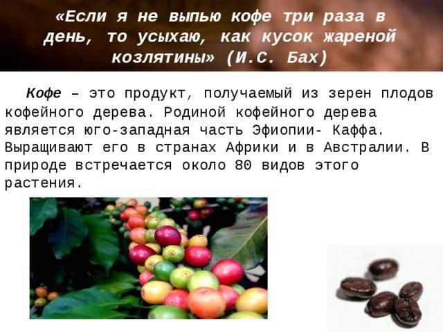 Небольшая плантация у вас дома - кофейное дерево: родина растения, виды, фото