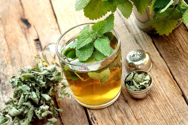 Чай с мелиссой: польза и вред, противопоказания, как заваривать и пить