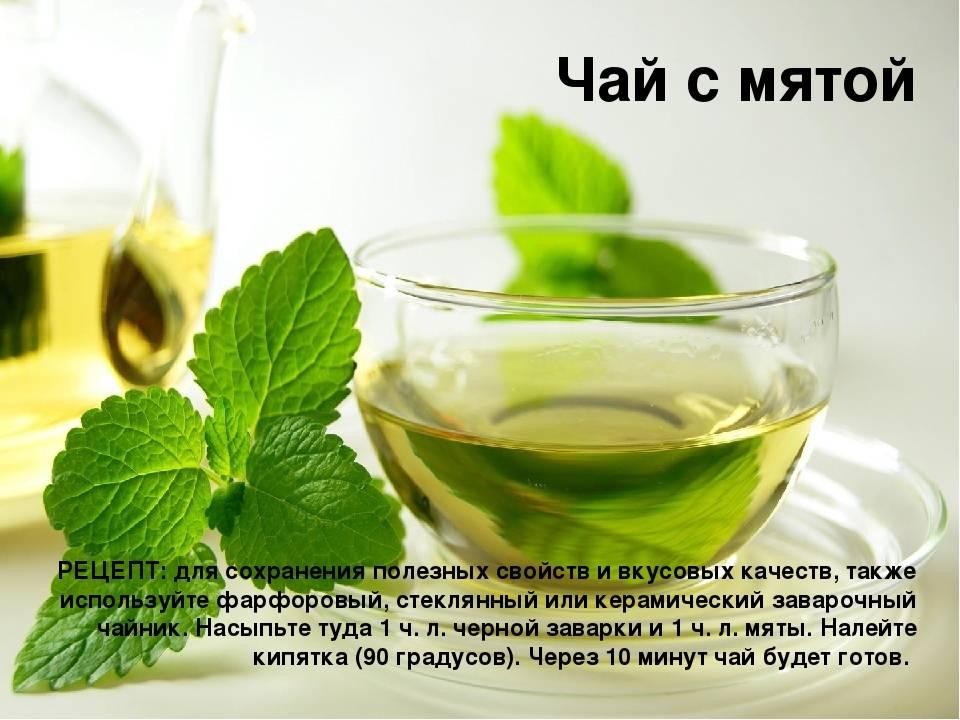 Можно ли беременным пить чай с мятой?