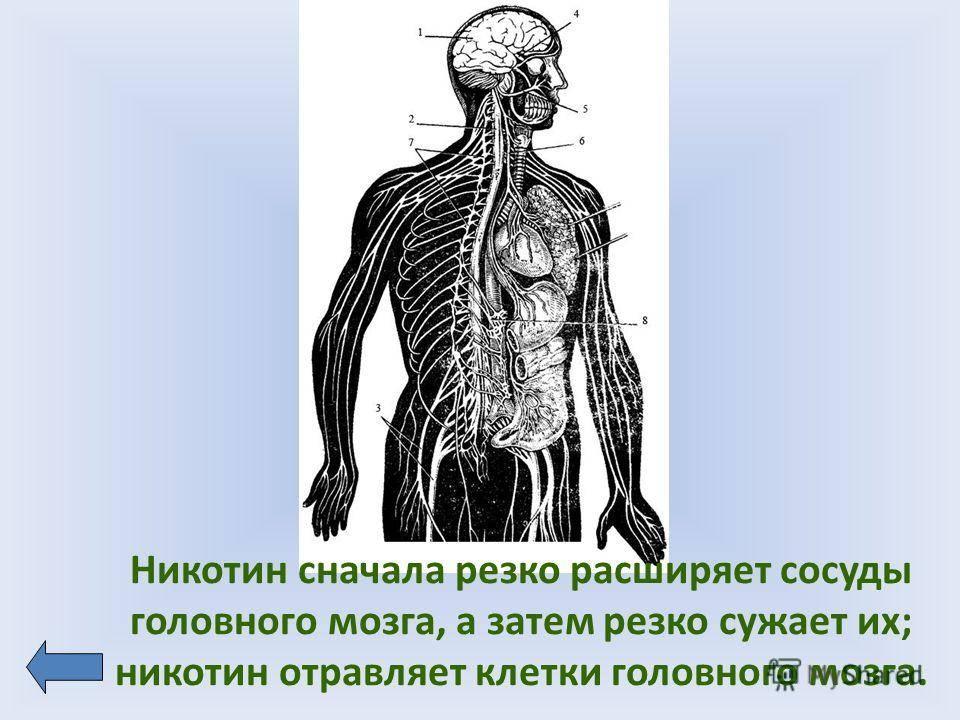 Алкоголь расширяет или сужает сосуды: как он действует на кровеносные артерии и что происходит с головным мозгом человека при употреблении спиртного?