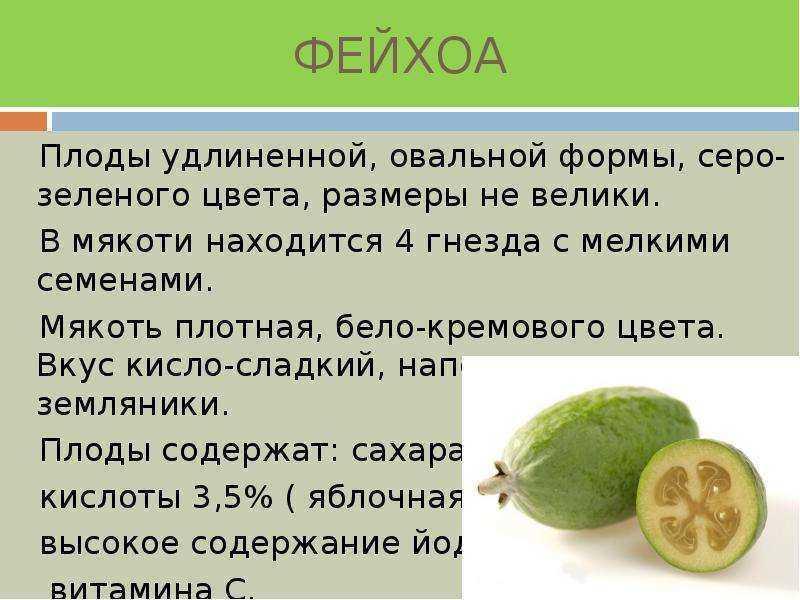 Фейхоа: полезные свойства, фото, как есть, рецепты приготовления, где растет ягода