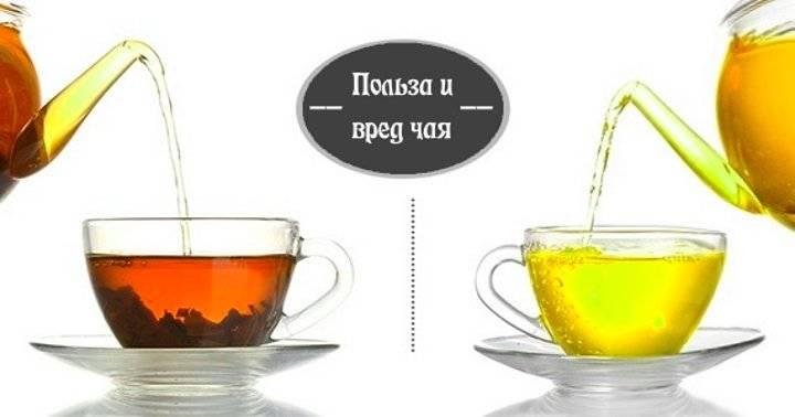 Чем отличается черный и зеленый чай