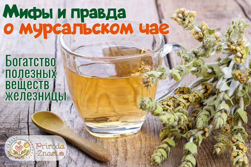 Мурсальский чай – болгарский ответ китайскому женьшеню
