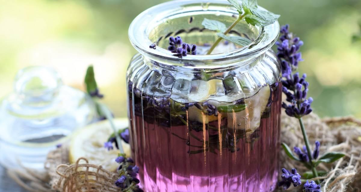 Лаванда: лечебные свойства, противопоказания, рецепты. лавандовое масло для волос