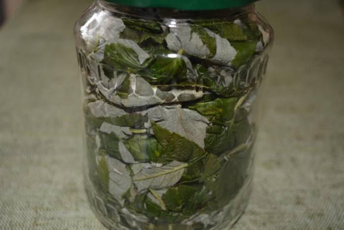 Ветки малины – польза и вред. полезные свойства, отвар и чай из веток малины