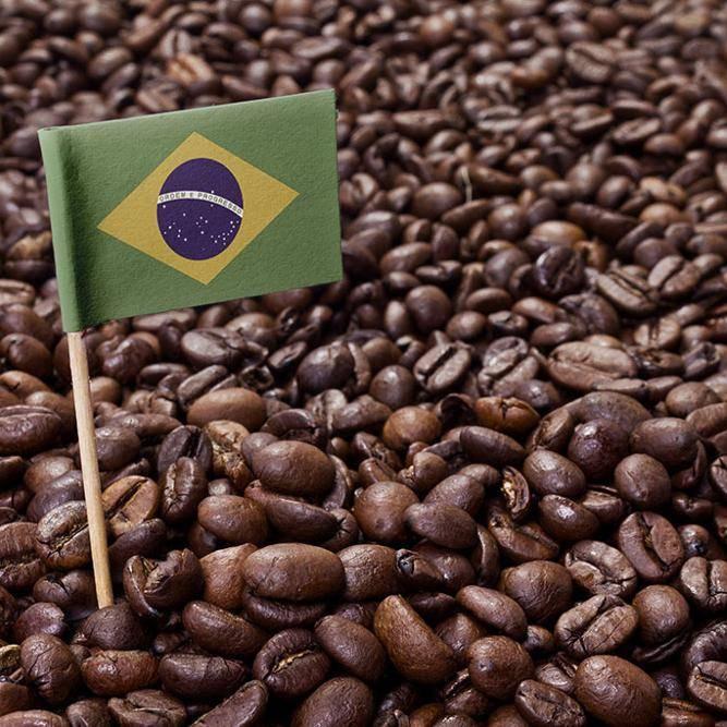 Кенийский кофе: особенности, сорта, виды, лучшие марки