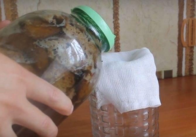 Как сделать закваску для кваса в домашних условиях? рецепты с дрожжами и без
