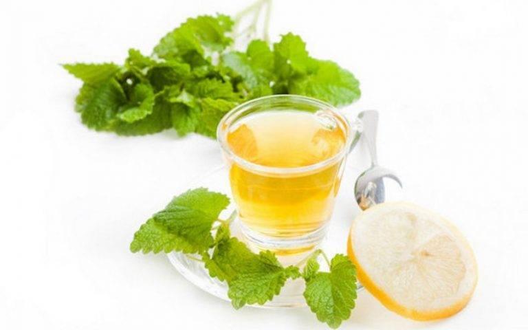 Иван-чай при беременности: можно ли пить?