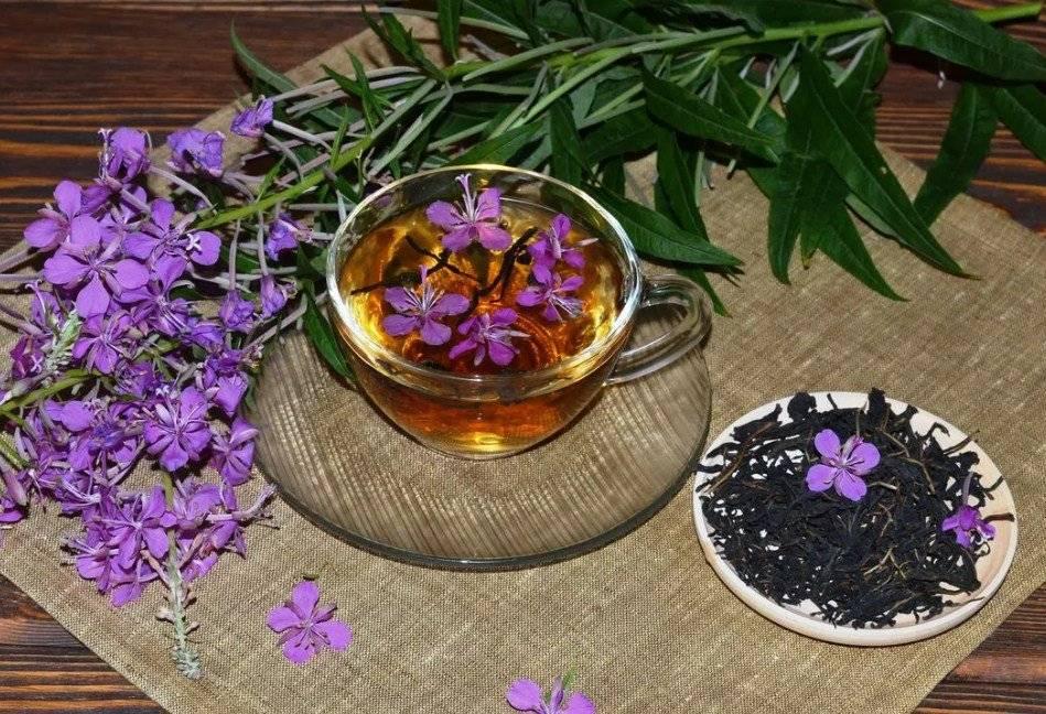 Кипрейный чай: польза и вред чайного напитка из кипрея
