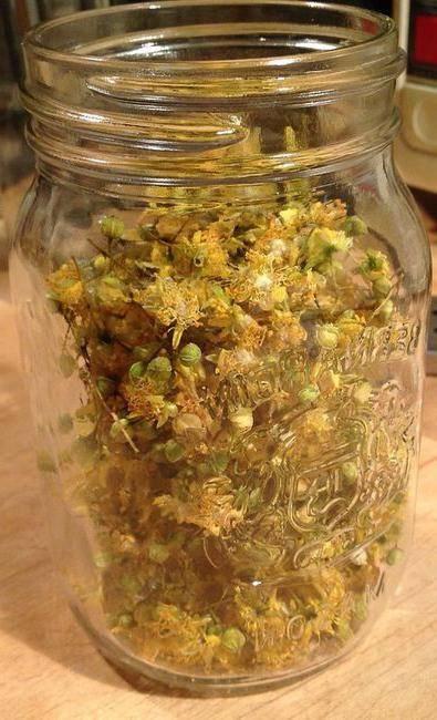 Чай из липового цвета: полезные свойства и противопоказания, как заваривать цветки липы