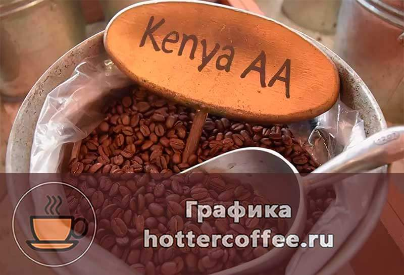 Как выбрать кофе. лучшие сорта кофе :: инфониак