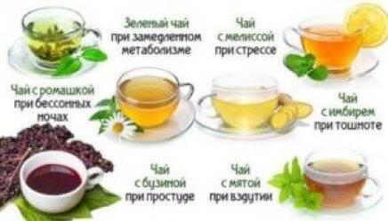 Полезные свойства и противопоказания зеленого чая с молоком