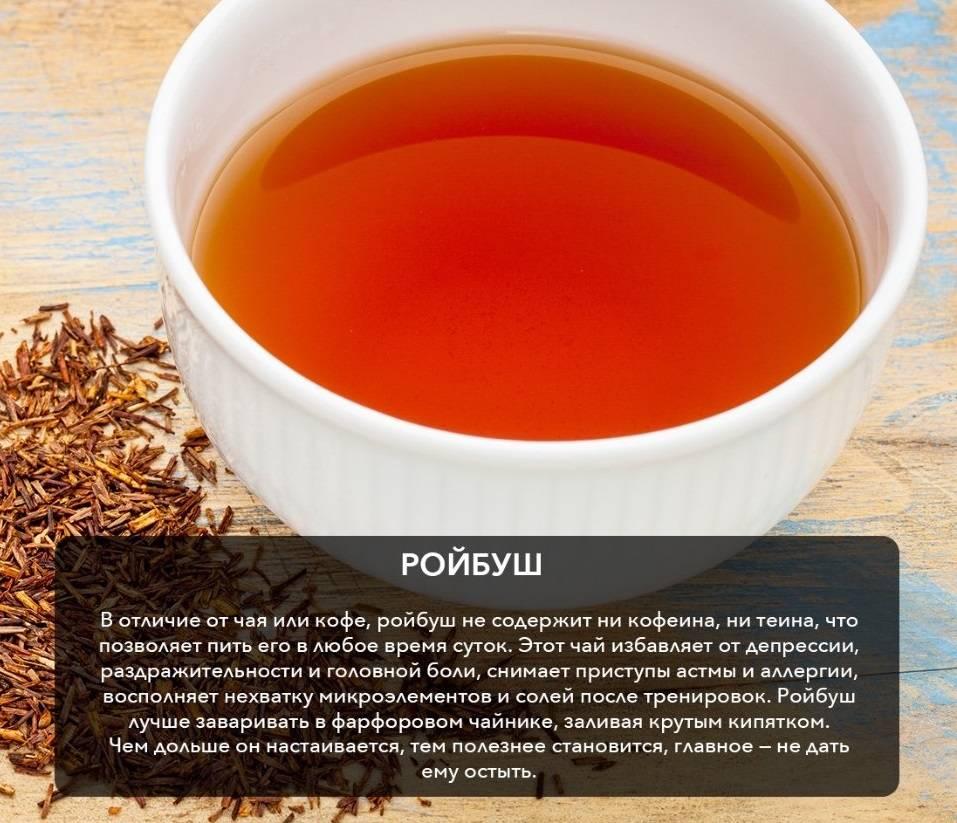 Чай ройбуш: полезные свойства и противопоказания, состав, польза и вред африканского чая