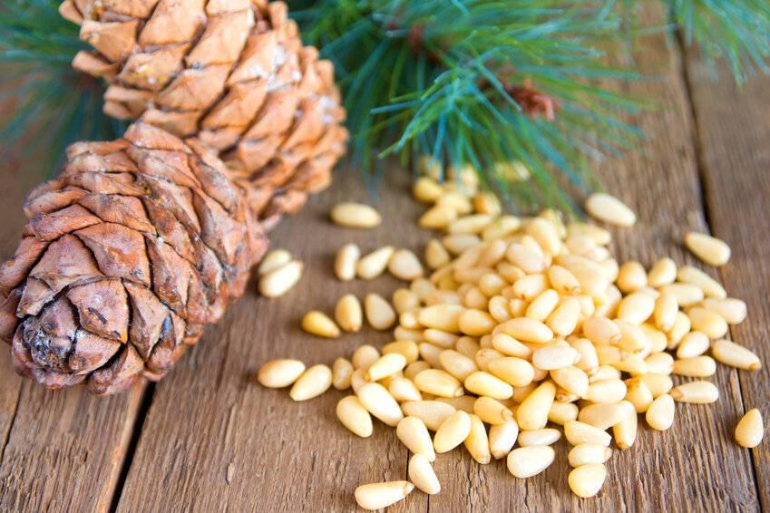 Кедровые орехи польза и вред для организма: состав и свойства