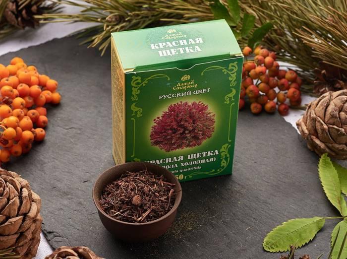 Трава красная щетка: что лечит, лечебные свойства и противопоказания