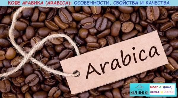 Кофейное дерево selo.guru — интернет портал о сельском хозяйстве