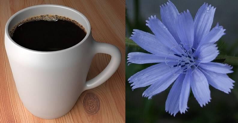 Что полезнее? кофе или цикорий?