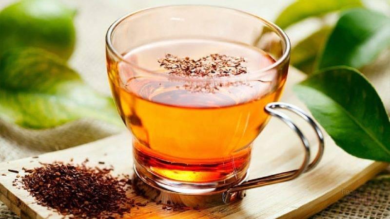 Чай ройбуш (ройбос): полезные свойства и противопоказания