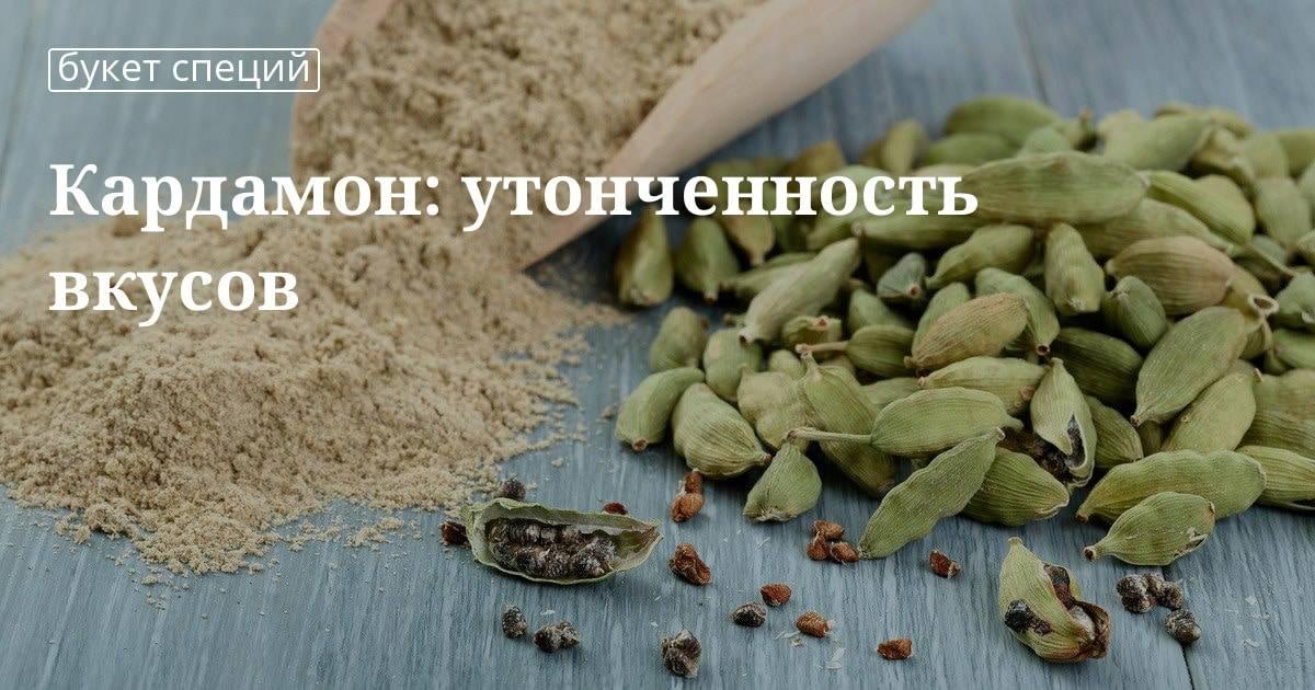 Кардамон: полезные свойства + применение в кулинарии и медицине