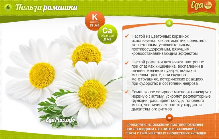 Ромашковый чай – польза для женщин