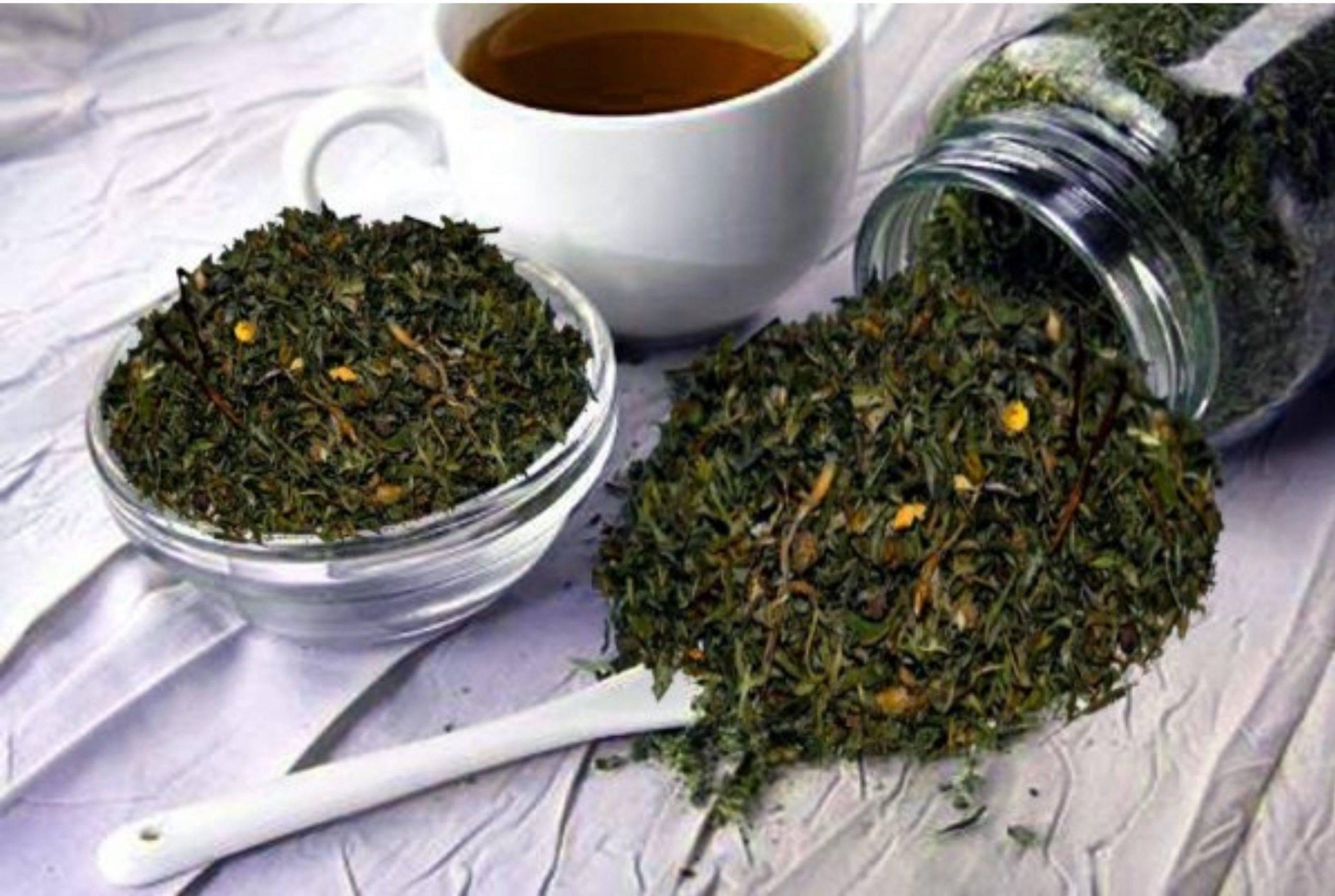 Чай из хвои польза и вред, рецепты приготовления