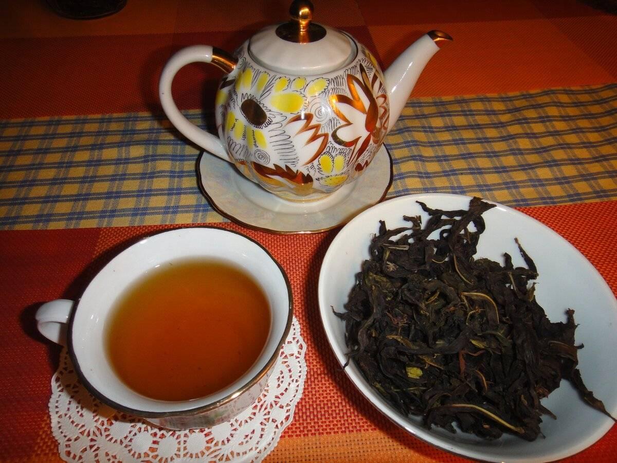 Заготовка, сушка и ферментация иван-чая в домашних условиях
