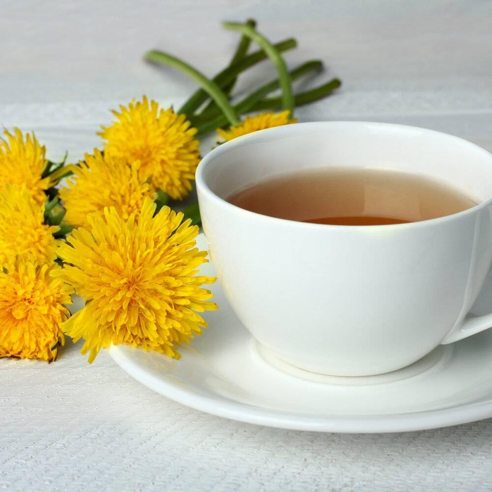 Чай из одуванчиков: полезные свойства, рецепты