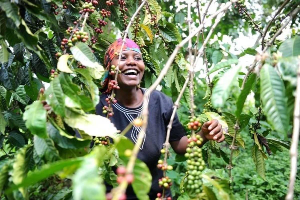 Где растет кофе, в каких странах его больше