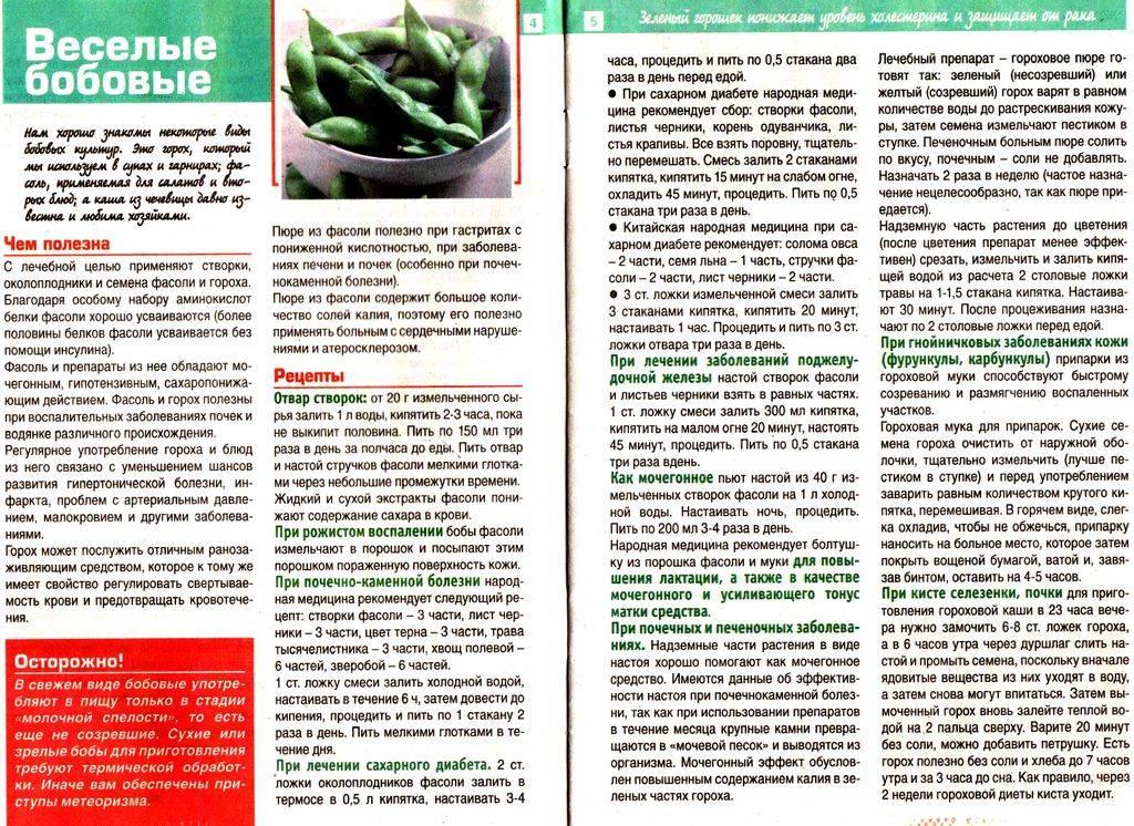 Створки фасоли: состав, целебные свойства, применение, чай, домашние рецепты, противопоказания