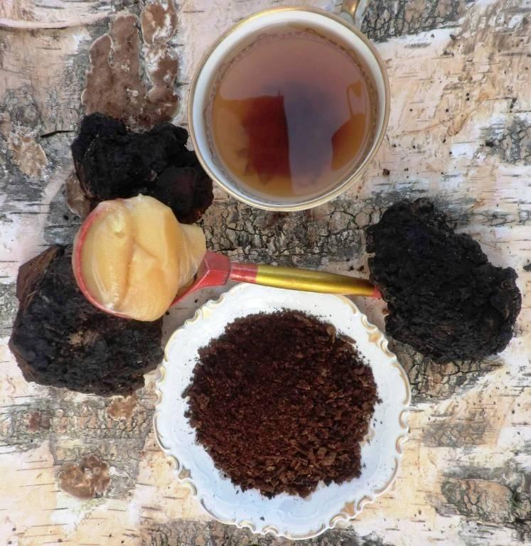 Целебный чай из чаги — польза и вред, рецепты приготовления и способ сбора