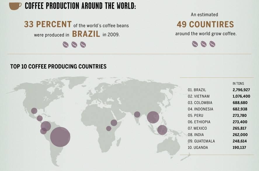 Где растет кофе: в каких странах выращивают, растет ли он в италии