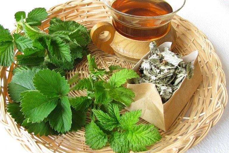 Cвойства и рецепты приготовления земляничного чая