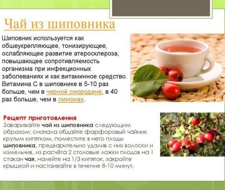 Чай из шиповника - польза и вред. как заваривать