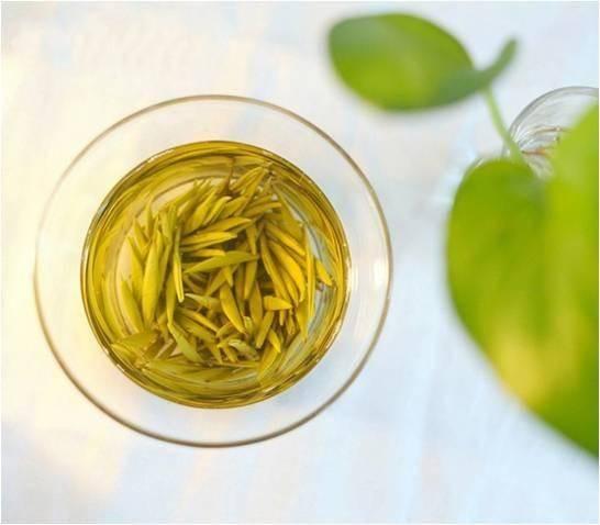 Чай бай хао инь чжень (серебряные иглы): полезные свойства, как заваривать