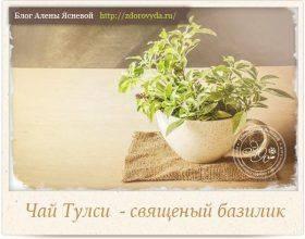 Базилик: польза и вред, применение в кулинарии