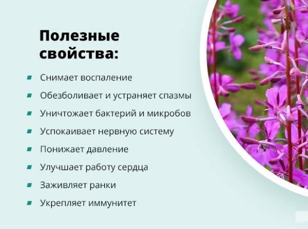 Обзор 5 лечебных свойств иван-чая для женского здоровья (+противопоказания)
