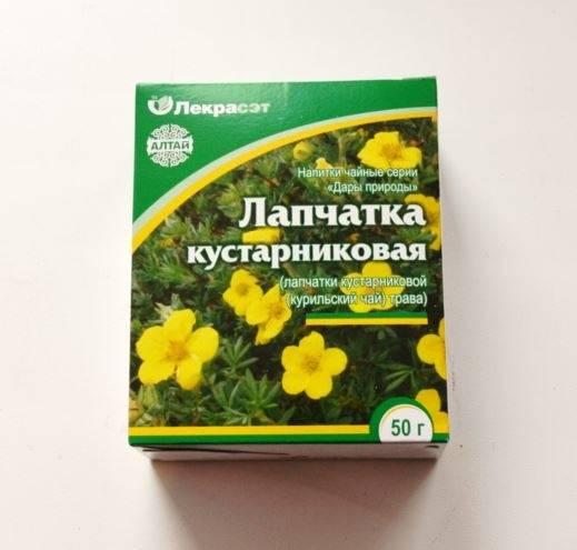 Курильский чай: полезные свойства и противопоказания, отзывы + фото