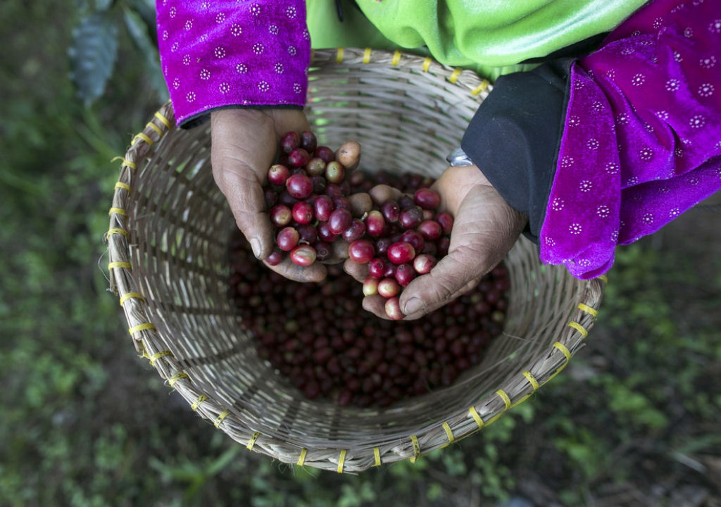 5 самых дорогих сортов кофе в мире