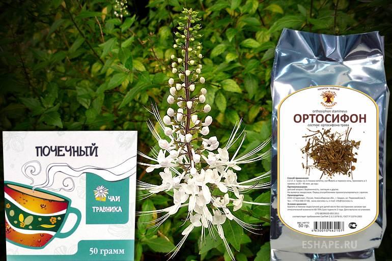 Ортосифона тычиночного (почечного чая) листья – инструкция по применению, показания, дозы