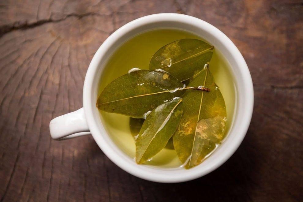 Чай из листьев оливы – полезные свойства, рецепты