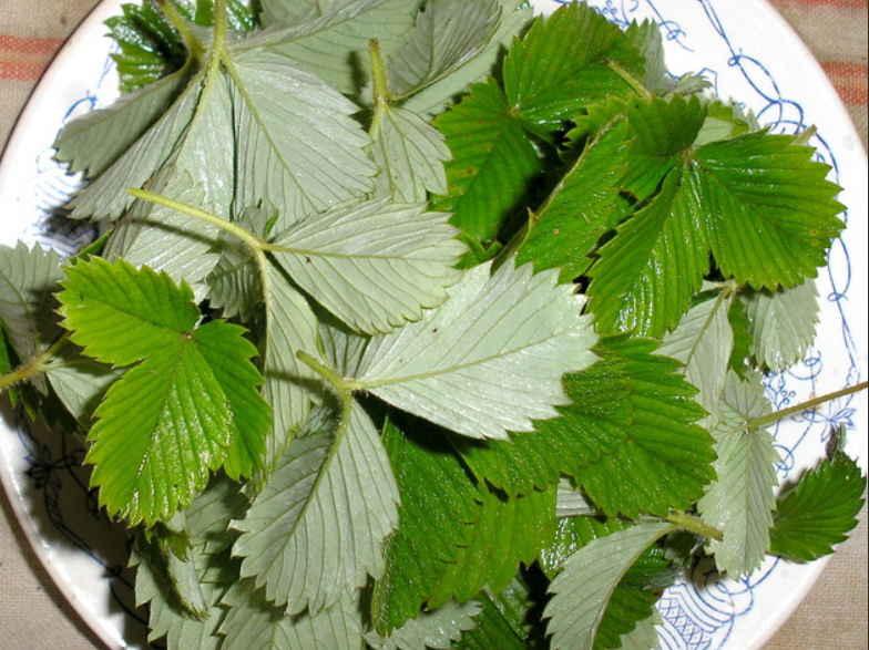 Чай из листьев земляники: польза и возможный вред